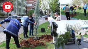 Haliliye'de yeşillendirme çalışmaları sürüyor