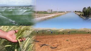 Urfa tarımının bitmeyen talihsizliği!