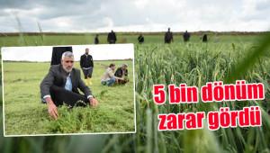 Dolu yağışı tarım arazilerini vurdu