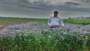 Güneydoğu'da arı otu yaygınlaştırılarak bal üretimi artırılacak