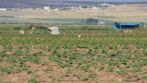 Sokağa çıkma kısıtlamasından muaf tutulan çiftçiler üretime devam etti