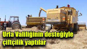 Telabyad ve Resulayn'da ilk hasat yapıldı