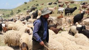 10 bin liraya çoban bulamıyorlar