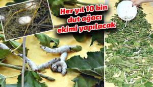 İpek Böcekçiliğinde ilk hasat yapıldı