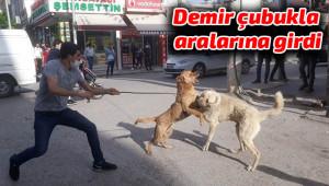 Köpekler için kendini tehlikeye attı