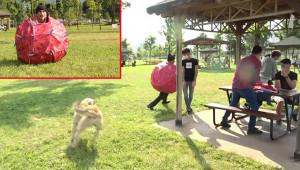 Korona kostümü giyen tiyatrocuyu köpek kovaladı
