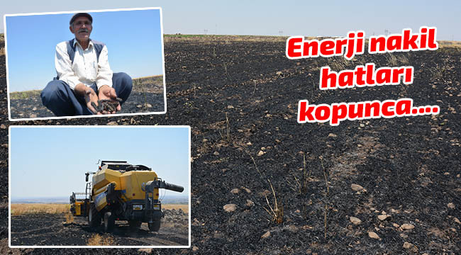 40 dönüm buğday ekili alan yandı