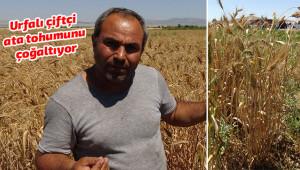 Bir avuç buğdayı çoğaltmaya çalışıyor