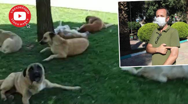 Görüntülediği köpeklerin saldırısına uğradı
