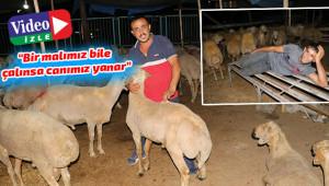Kurbanlar çalınmasın diye koyun koyuna yatıyorlar