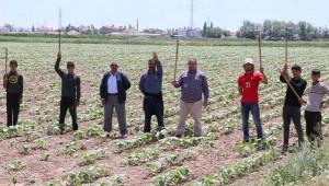 Tarım işçileri olmazsa tarım olmaz