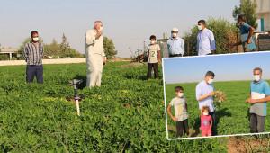 Harran'da yer fıstığı üretilmeye başlandı