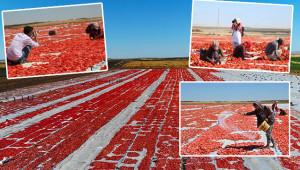 Kurutmalık domatesler fotoğrafçıların kadrajında