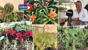 Göze, buruna ve hastalığa hitap eden bitkiler