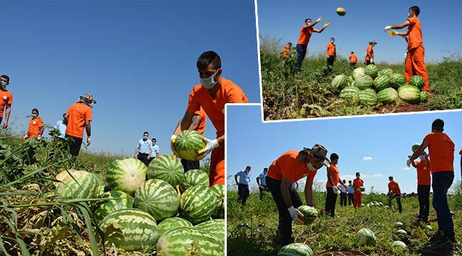 Hükümlüler tarımsal üretime katkı sunuyor