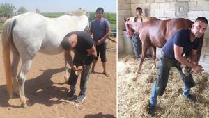 Şampiyon atların nallarını çakıyor