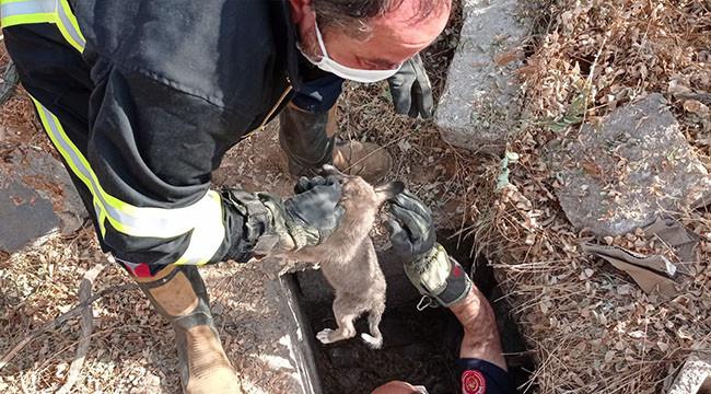 Çukura düşen köpek yavrusu kurtarıldı