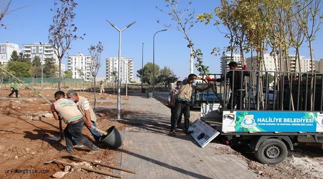 Haliliye' de temizlik çalışmaları devam ediyor.
