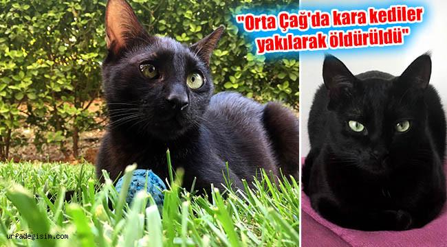 Kara kedilerin 'kara' talihi