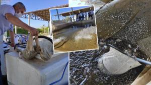 Ortadoğu'nun en büyük balık üretim tesisi