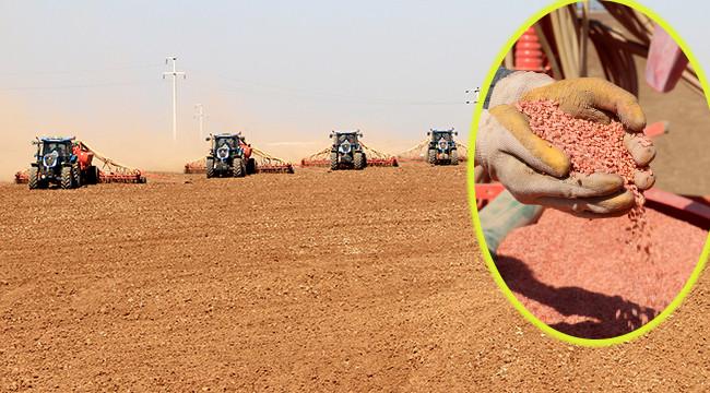 Yerli tohumlar Urfa'da çoğaltılıyor