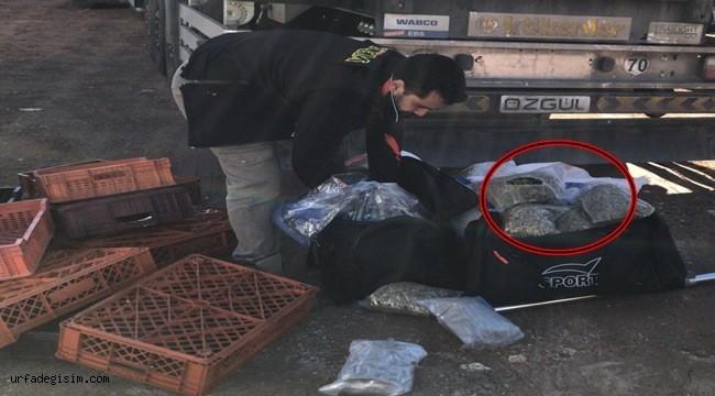 26 kilogram skunk ele geçirildi