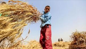 Tarım işçisi çocuklar için yeni proje