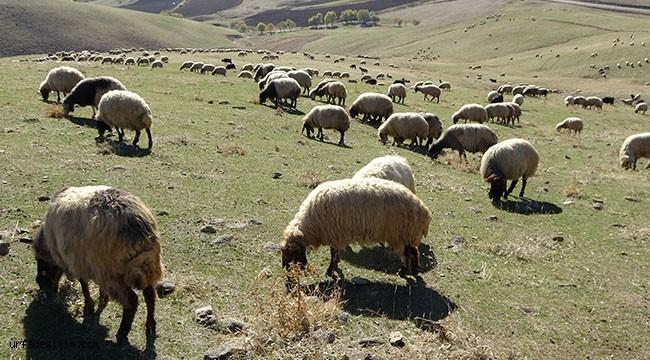 Göçebeler hayvanlarını Urfa'ya getirdi