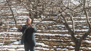 Antep fıstığı üreticisi kar yağışından umutlu