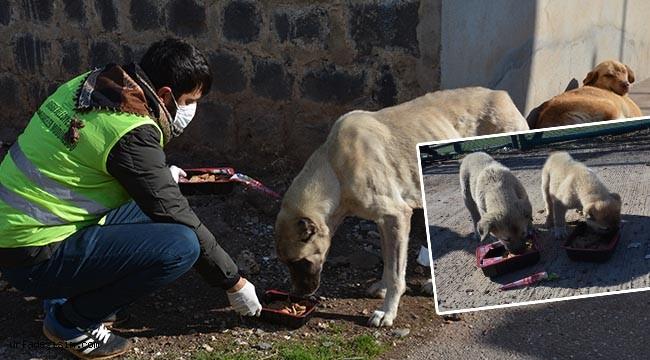 Sokak hayvanları unutulmadı