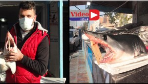 Tezgahta ki köpekbalığı şaşırttı