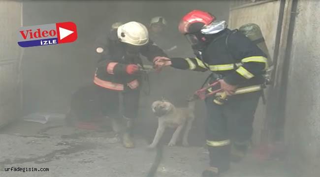 Haliliye'de bir ahırda yangın çıktı
