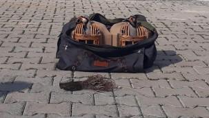 Şanlıurfa'da kınalı keklik ele geçirildi