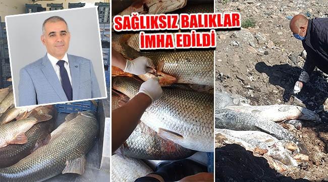 Bozova'da yüzlerce kilo balık imha edildi