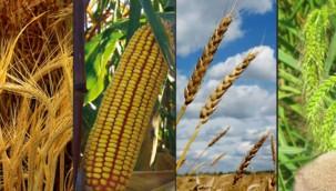 Arpa, buğday ve mısır kaç liradan satıldı