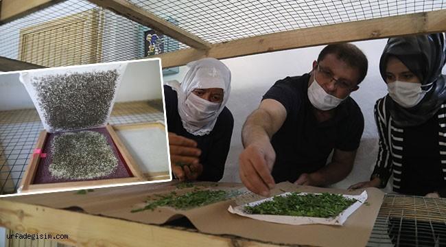 İpekböcekçiliğinde hem eğitim hem malzeme desteği