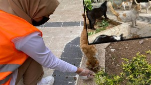 Sokak hayvanlarına mama bırakıldı