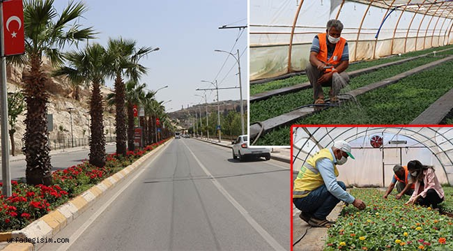 Yetiştirilen çiçekler park ve bahçeleri süsledi