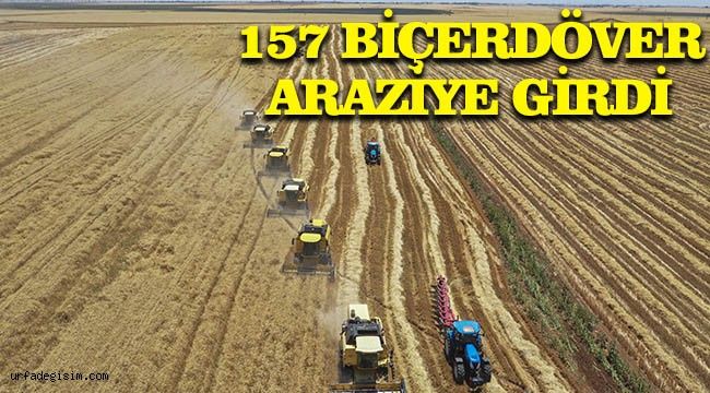 En büyük tarım işletmesinde buğday biçiliyor