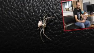 İnsan yüzlü örümcek Türkiye'de 7. kez ortaya