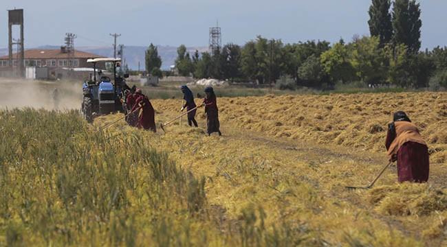 Kırmızı mercimekte çiftçiler beklediğini alamadı