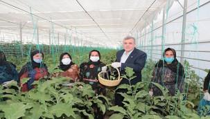 Seracılık projesinde ilk hasat yapıldı