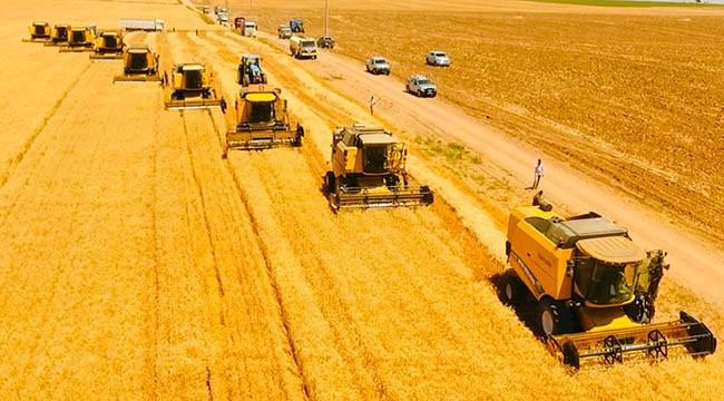 TİGEM'de buğday hasadı başladı