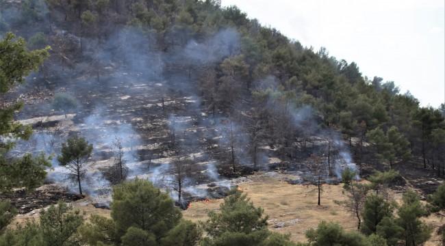 Urfa'da ormanlık alanda yangın!