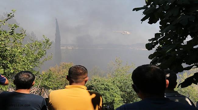 Yangınında seraların örtüleri ve zeytin ağaçları küle döndü