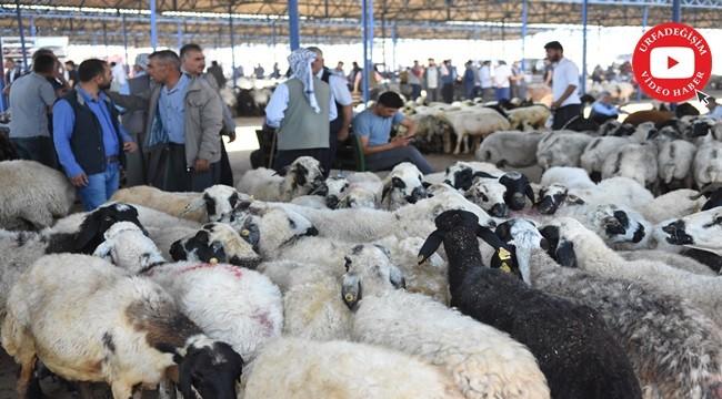 Bölgenin en büyük hayvan pazarında hareketlilik