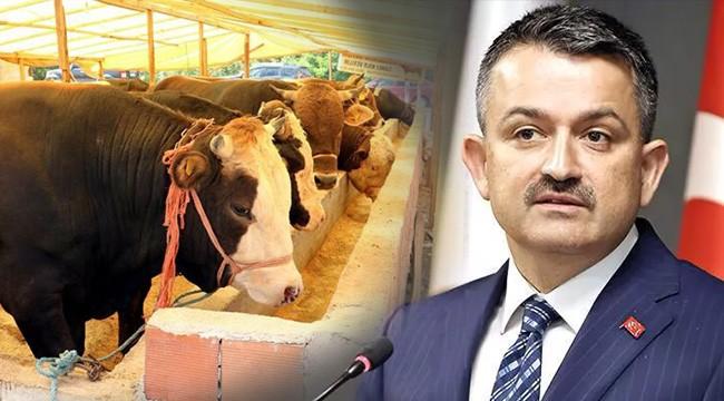 Elde kalan hayvanları Et ve Süt Kurumu alacak
