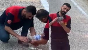 Elleriyle kaplumbağaya su verdiler!