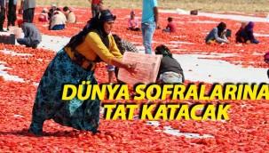 Karacadağ'ın domatesleri dünyaya yayılacak!