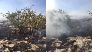 Ormanlık alanda başlayan yangın fıstık bahçelerine sıçradı